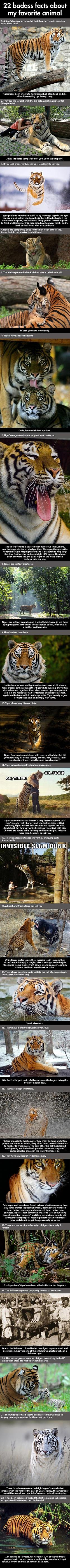 Animal-AboutTiger
