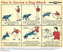 Animal-HowToSurviveDogAttack