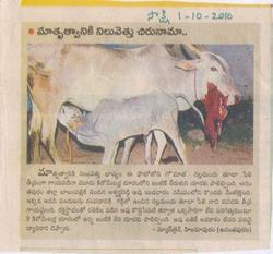 AnimalGreatness-CowGreatness