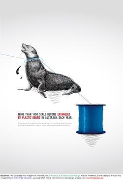 Plastic-SealsBecomeEntangledByPlasticDebris